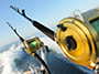 Deep Sea Sport Fishing from Montego Bay