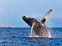 Exclusive Whale Photo Safari
