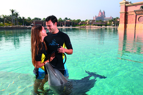Dolphin Experiences at Dolphin Bay