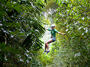 Antigua Rainforest Canopy Adventure