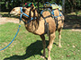 Camel Ride Adventure Tour